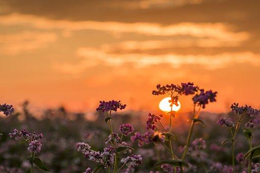 Sunset, Sun, Nature, Abendstimmung, Ciel