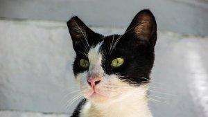 猫, はぐれる, ハローキティ, 目, 通り, かわいい, 動物, 好奇心