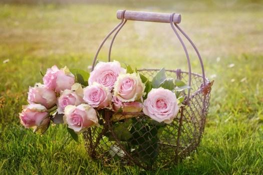 Rose, Fiore, Rosa Rosa, Fiore Rosa, Rosa Fiori, Cesto