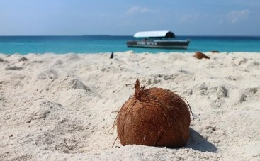 Coconut, Beach, Sand, Sand Beach, Boot