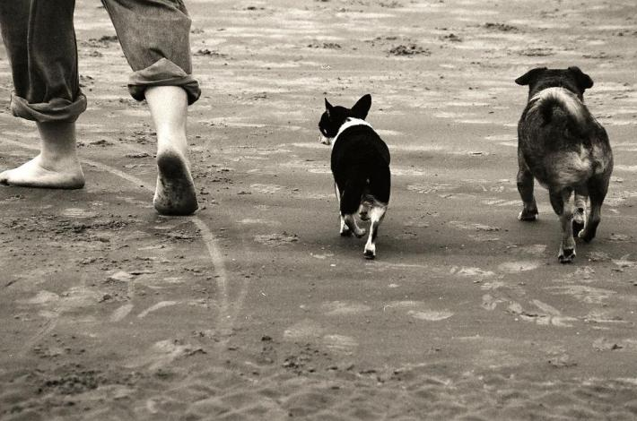 Walking Beach, Footsteps, Dogs, Seashore, Landscape