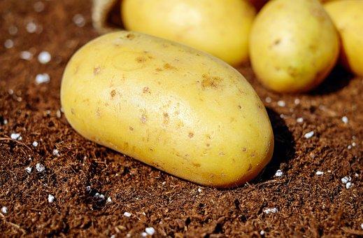 Pommes De Terre Légumes Erdfrucht Bio Réco