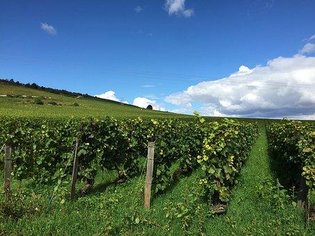 ブドウ園, ブルゴーニュ, フランス, ワイン
