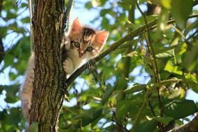 Cat, Kitten, Tree, Green, Summer, Animal
