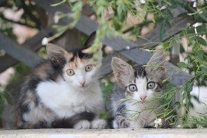 子猫, 猫, 美しい猫, ギリシャ, キオス島, 動物, ペット, 無料画像