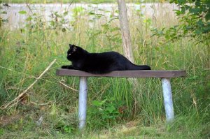 動物, 黒猫, ベンチ, フォレスト, Karupsnygårdの, 夏