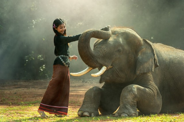 Asia elefante niña