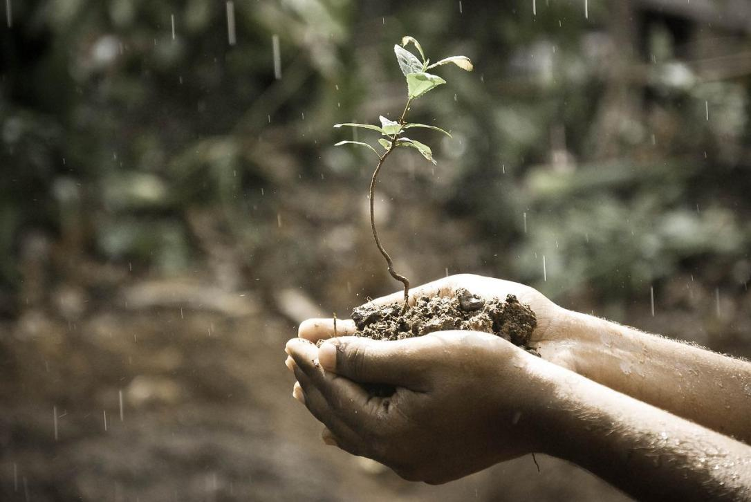 hands holding sprouting plant in the rain