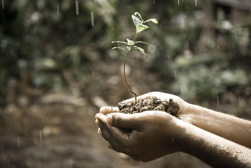 Hände, Makro, Natur, Im Freien, Pflanze, Regen, Boden