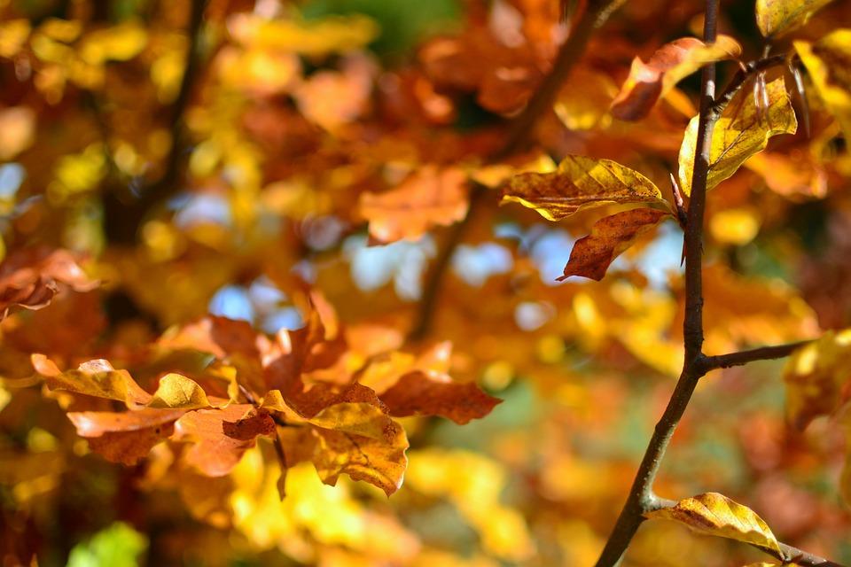 Autumn, Fall, Foliage, Leaves, Nature, Trees