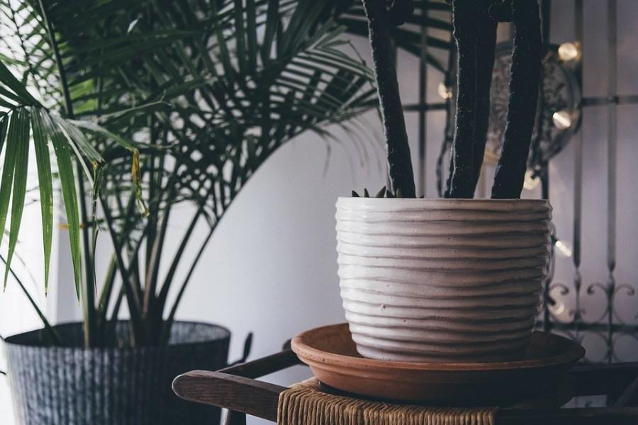 Decoration, Indoor Plants, Plants, Pots, Vase