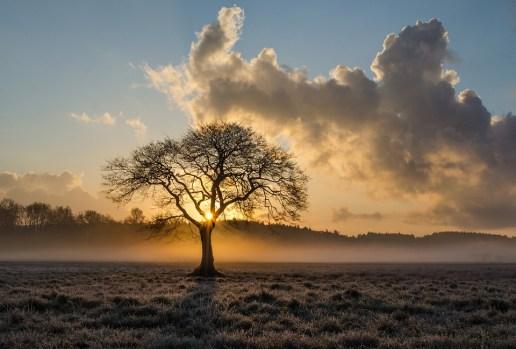 ローンツリー, 木, オーク, 雲, 風景, ヘイズ, 靄, 日没, 秋, 夜, トワイライト, 自然