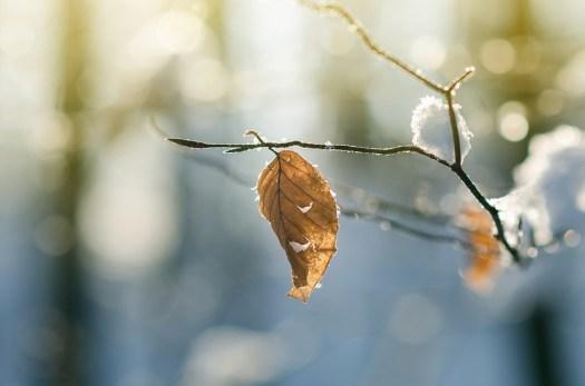 Inverno, Foresta, Frost, Leafe, Lasciare, Secco, Ramo