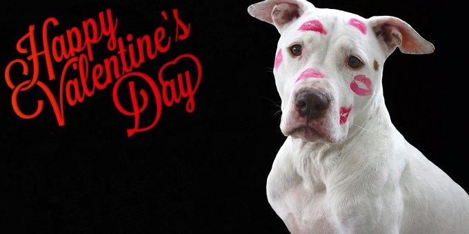 Valentine's Day, Love, February, Loyalty