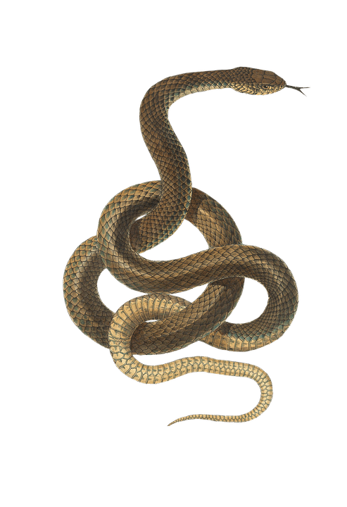Snake, Reptile, Animal, Vintage, Isolated