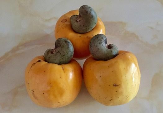 Caju, Frutas, Fruta Do Caju, Castanha De Caju