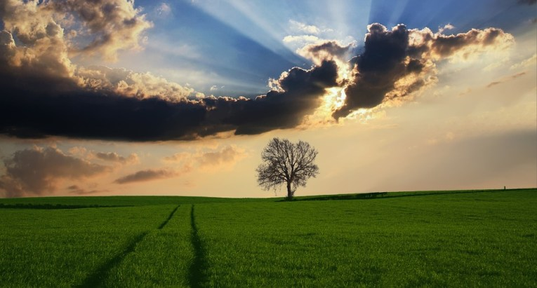 Landscape Images      Pixabay      Download Free Pictures Countryside Tree Landscape Sunlight Nature