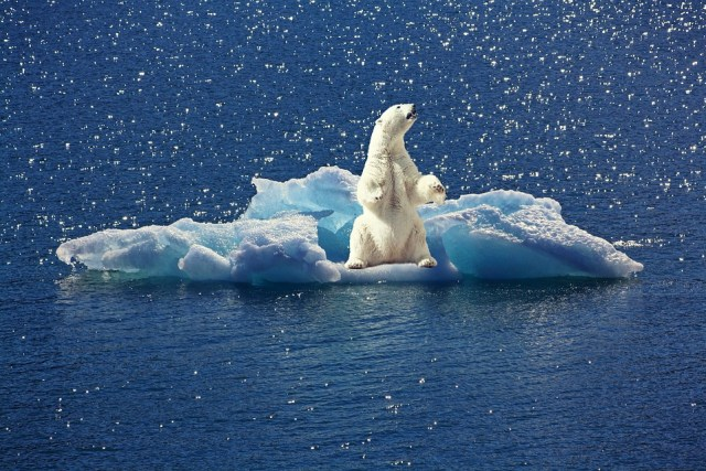 Oso De Hielo, Iceberg, Témpano De Hielo, Polo Norte