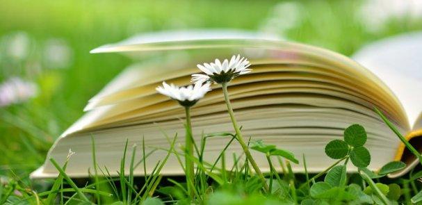 Livre, Lecture, Relax, Prairie