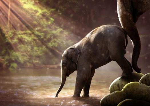 Elefante, Giovane, Abbeveratoio, Giovane Elefante