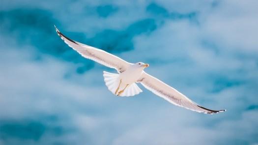 Gabbiano, Portogallo, Algarve, Volo, Cielo, Libertà