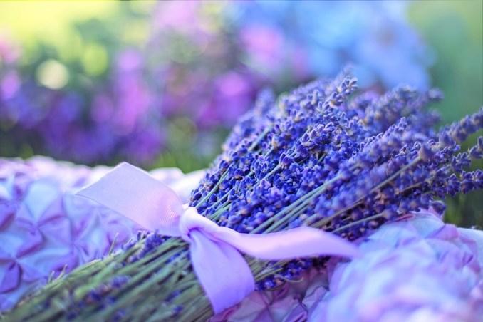 Lavenders, Flowers, Bouquet, Purple, Bunch