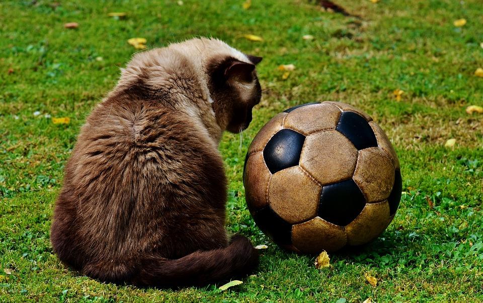 サッカーボールと猫