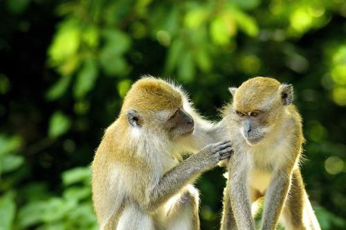 Monkey, Animal, Love, Baby, Wildlife, Mammal, Nature