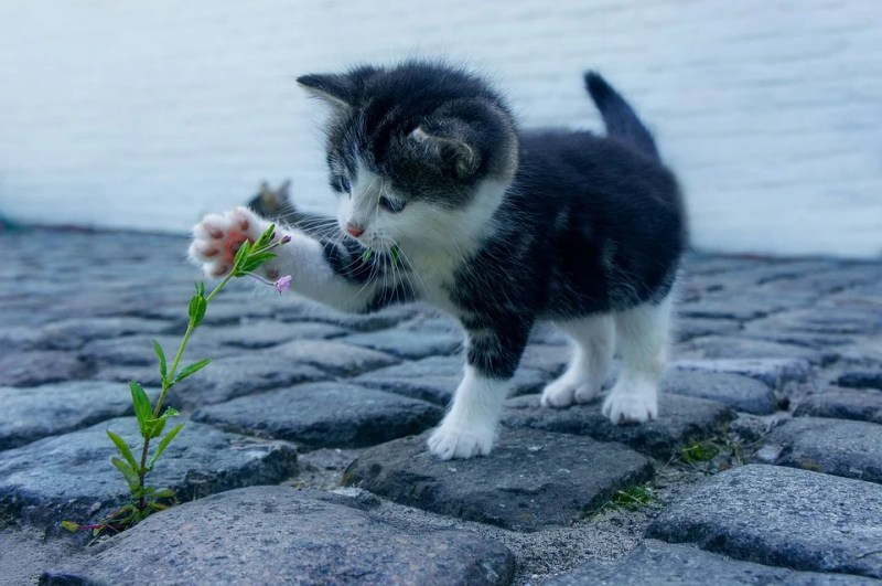 Cat, Flower, Kitten, Stone, Pet, Animals, Explore