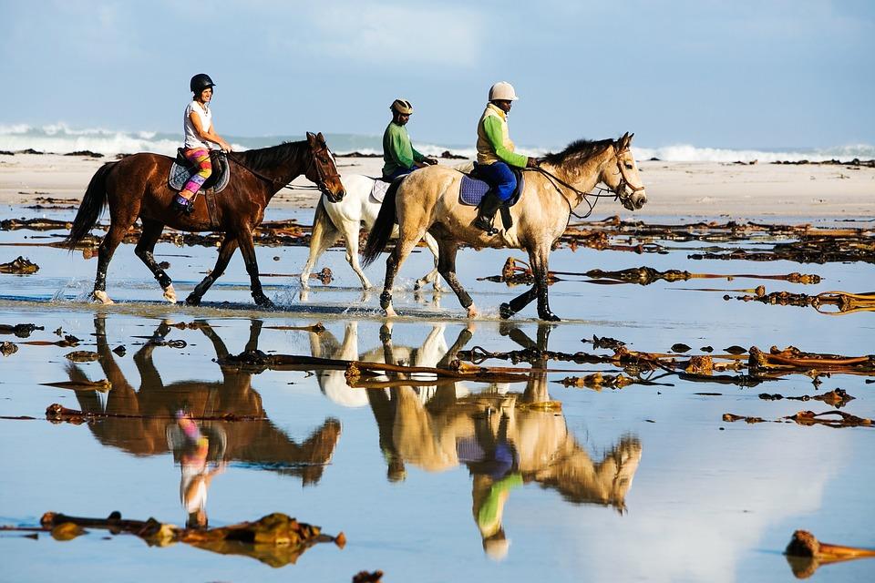 Beach Ride, Horse Ride, Riding, Horses, Horseriding