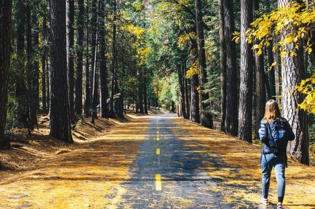 Estrada, Árvore, Planta, Floresta, Natureza, Folha