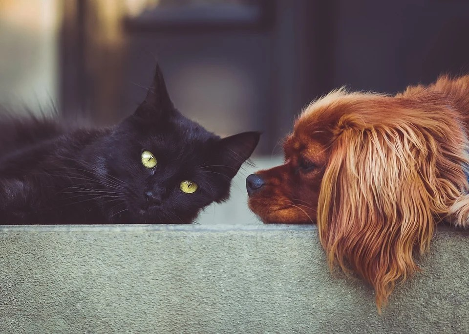 Dog, Cat, Pets, Animals, Friends