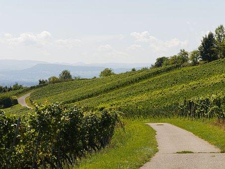 ブドウの木, ブドウ畑, ブドウ, ブルゴーニュ, 自然, 収穫, ワインの地域