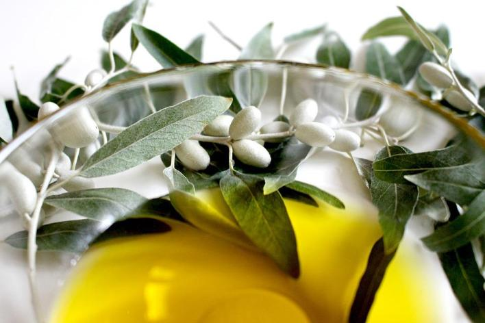 Olive Oil Leaf - Best Healing Herbs and Plants for Dogs and Cats