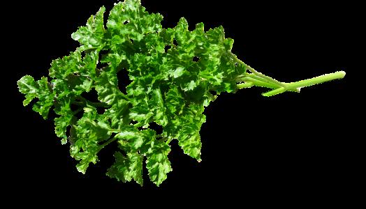 Erva, Salsa, Alimentos