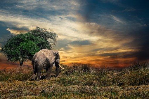 Elephant, Mammal, Safari, Animal, One