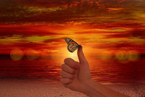 ような, 親指, 蝶, 容易さ, ウェルネス, 愛情, 高, 肯定的です