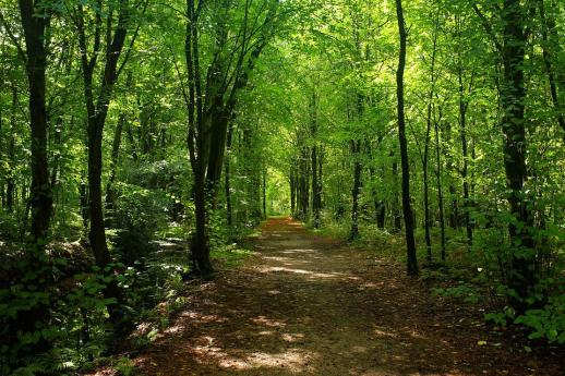 Forest, Trees, Forest Path, Lighting, Sunlight