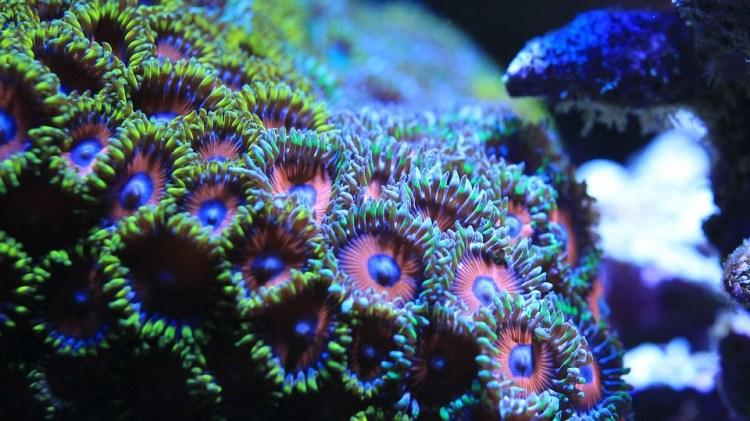 Saltwater Fish, Aquarium, Water Tank, No Spine