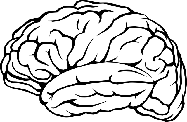Brain Mind Thinking · Free Vector Graphic On Pixabay