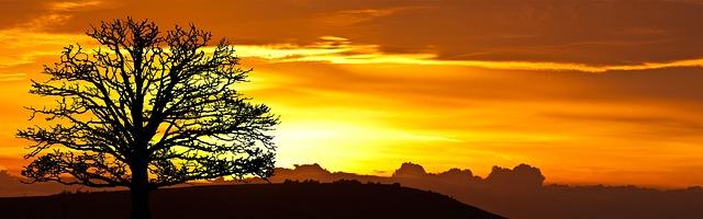 Sunrise Tree Nature 183 Free Photo On Pixabay