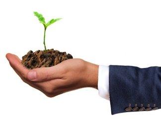 Germ, Plant, Seedling, Live, Nature