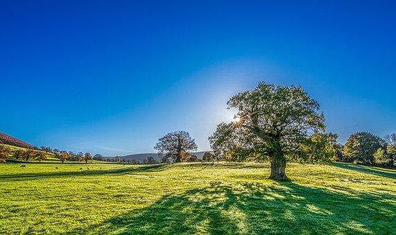 Tree, Sun, Sunshine, Summer, Meadow