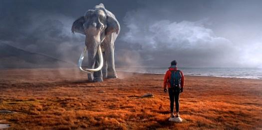 Fantasia, Paesaggio, Elefante, Uomo, Comporre, Mistico