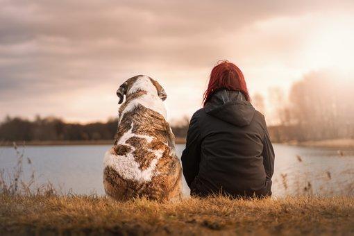 Friends, Dog, Pet, Woman Suit, Sunset