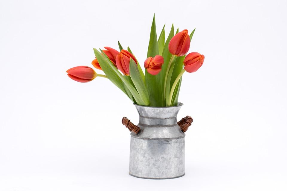 Garden Flowers In May Or June Plant Amp Flower Stock