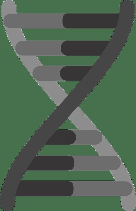 Gene Icon Genetics Dna 183 Free vector graphic on Pixabay