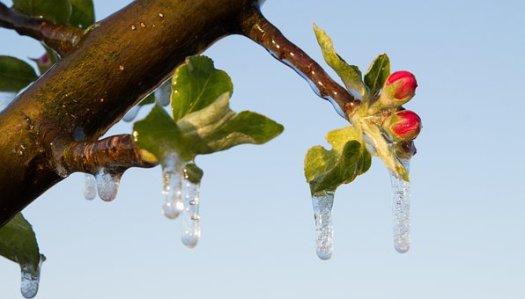 Natur, Baum, Pflanze, Frostberegnung