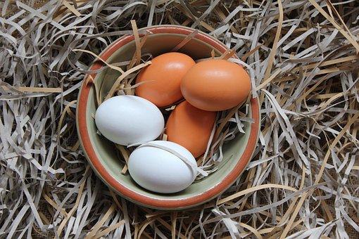 Αυγό, Μπολ, Τροφίμων, Φύση, Εμφώλευσης