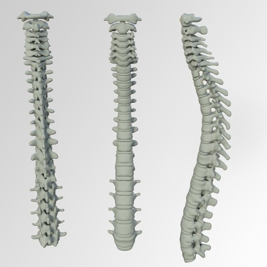 Colonna Vertebrale, Osso, Mal Di Schiena, Vertebre